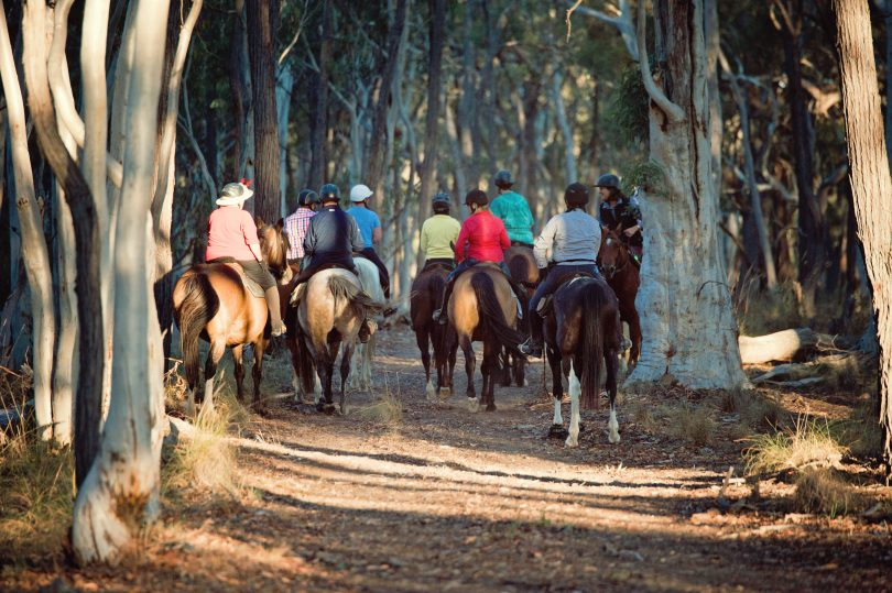Group horse riding.